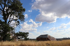 Tin Shed (Victoria) (IDH Mackinnon) Tags: old tin shed barn red corrugated iron fading victoria victorian australia australian aussie 2018 farm farmhouse farmland building country countryside rural tree sky dramatic summer hot heritage agricultural