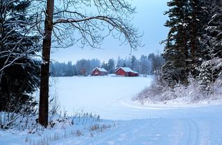 Winter Composition