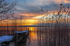 Rising by the Sea (Jens Haggren) Tags: morning sun sunrise sea seascape jetty bridge broken water ice snow winter reed grass tree sky clouds colours view landscape nature nacka sweden olympus em1 jenshaggren