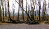 the walking forest (*amalthea*) Tags: tennessee shore caneyforkriver