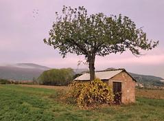 Le cabanon (Jolivillage) Tags: jolivillage cortona toscane tuscany toscana italie italia italy europe europa campagne campagna landscape paysage paesaggio picturesque geotagged cabanon arbre tree albero