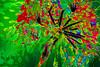 Inflorescencia (seguicollar) Tags: inflorescencia verde planta green red rojo vegetal virginiaseguí
