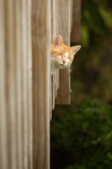 How you doin? (imajane) Tags: 2018 janemonaghanphotography imajane 20180116 cat puss mana fun funny smile smiling smilingcat deck rails throughtherails home aw cute