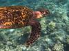 IMG_9389 (Karsten Kretz) Tags: underwater schildkröte turtle malediven maldives
