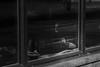 window knitting (Jeff Hayward (@pointandwrite)) Tags: hamont knitting storefronts streetphotography bw urban people hobbies