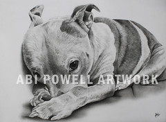 A4 pencil commission drawing (AbiiMedia) Tags: abiimedia abii abipowell abipowellart abiipow art fineart realism pencil pencildrawing sketch dog pet staffy reallife realistic