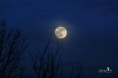 Santa Claus goes home :-) (Schneeglöckchen-Photographie) Tags: santa claus moon moonlight night mond supermond