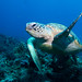 High five! (or is that one?) Green turtle Chelonia mydas #marineexplorer