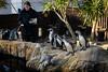 Sea life-8 (MartinHots) Tags: slip falling weymouth animals feeding hungry water penguins