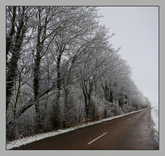 Poudrage (afantelin) Tags: yonne bourgogne michery arbres route hiver neige branchage