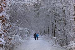 A walk in winter wonderland (FocusPocus Photography) Tags: winter schnee snow weg path wald forest spaziergang walk bäume trees
