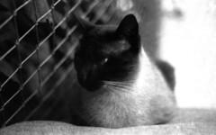 Super Gato Meli (a.ninguem) Tags: pentax k1000 film tmax kodak expired black white filme 35mm cats cat analog equal