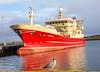 Altaire LK429 (Mairs Pier Lerwick 08/02/2018) (Ivan Reid) Tags: pelagic altaire lerwick lerwickportauthority calm seagull reflection trawler mackerel shetland
