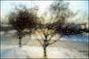 wintry mix (javan123) Tags: drops weather winter 2018 dof bokeh tree sun blur seasons cold frozen