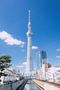 TOKYO SKYTREE_東京スカイツリー_8 (hans-johnson) Tags: tokyo sakura spring skytree tokyoskytree sky tree blue white sumida sumidaku landmark kanto japan 東京 スカイツリー 東京スカイツリー スカイ ツリー 白 墨田 墨田区 ランドマーク 東武 テレビ タワー tower 関東 関東地方 日本 アジア 旅行 travel asia 戶外 建築物 塔 摩天大廈 建築 簡約主義 天際線 線條 隅田川 sumidagawa 16mm 建築大樓 城市 red flower plant nature 600m skyscraper building canon eos 5d 5d3 vsco architecture skyline day light daylight 1635mm asian 35mm downtown trip tour landscape