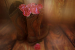 The Story so far... (Debbie Louise Hutchins) Tags: stilllife stilllifephotography rose roses pinkroses pinkrose flower flowers pinkflower wood woodenfloor bokeh macro soft pastel pink boots cowgirl cowgirlboots cowboyboots nikon sigma sigmaart sigmaf14 nikond750 art fineart creativeart creativephotography artistic artist story january 50mm