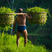 Man Carrying Rice In Bali