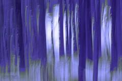 storybook forest (zawaski) Tags: canmore alberta dogsledding foundryranch naturallight noflash beauty rockymountains elk canada love calgary zawaski©2018 ambientlight heaven signs maddogenglishman fun canonefs55250mmf456isstm