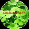 Trà rau má - món trà giải nhiệt , giải độc (dacsandanang.dlp) Tags: public view