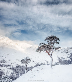 Glen Nevis Pines in Winter