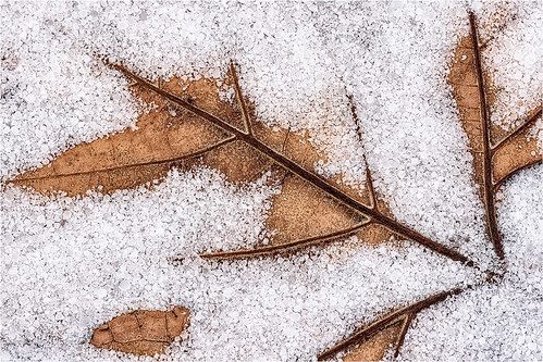 Leaf in Ice- by Chuck Hunnicutt - HM Class B Digital- January 2018