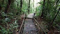 Caminho do Itupava (clodo.lima) Tags: escada santuarionossasenhoradocadeado nossasenhoradocadeado mata floresta caminhodoitupava ironladder