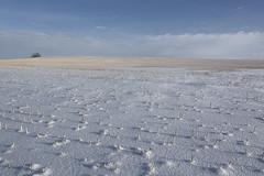 Study in stubbleography (Len Langevin) Tags: winter minimalism minimalist snow stubble prairie alberta canada nikon d7100 tokina 1224