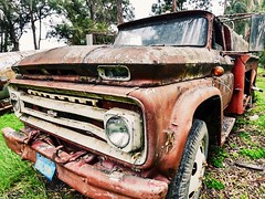 Rust bucket (Holly Calinsky Jauch) Tags: abandoned rust truck