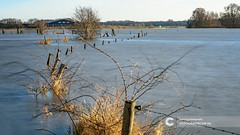 Flooded river bank in The Netherlands (Fotografiecor.nl) Tags: ijssel area background bare beautiful blue branch countryside dutch environment europe flood floodplains flooded floodedarea flooding floodplain gelderland grass green holland landscape light natural nature netherlands outdoor path reflection reserve river road rural scene scenic season sky stream travel tree view water weather winter olst overijssel nederland nl