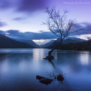 Lone Tree Dawn