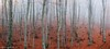 Misty beech tree forest (Mavroudakis Fotis) Tags: autumn beech forest panoramic tree view background branch colors dawn dramatic dusk ecology environment evening fading fall fantasy fir flora nature outdoors serenity scenery autumnal greece kavala sustainability macedoniagreece makedonia timeless macedonian macédoine mazedonien μακεδονια македонија