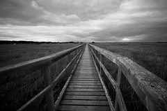 Dark bridge taken along Newtown Creek . #bridge #dark #walk #landscape #canon #blackandwhite #capture #creek #travel #cloudscape #wood #explore (williamslisa630) Tags: bridge dark walk landscape canon blackandwhite capture creek travel cloudscape wood explore