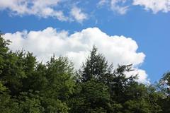 IMG_0584 (comtrag) Tags: flumegorgenh flumegorge nh newhampshire lincolnnh