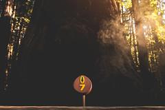 Henry Cowell Park, Santa Cruz (markmartucciphoto) Tags: markmartucciphotography markmartucciphotocom markmartucciphoto cali california henry cowell santa cruz park redwoods sign