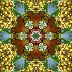 Kaleido Abstract 1746 (Lostash) Tags: life nature flora edited kaleidoscopes patterns shapes symmetry