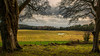 Mount Stewart (explored) (Chris-Henry) Tags: mountstewart countydown northernireland trees fields ards newtownards strangfordlough peninsula cattle