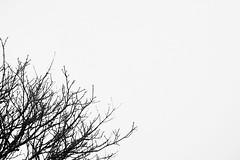Day Thirty One (mark_stevo) Tags: project365 project3652018 dailyphotography justgoshoot artofvisuals sony sonyimages sonyalpha sonya7 sonya7rii a7rii ilce7rm2 sel70200g 70200mm 70200 sony70200f4 sony70200g telephoto agameoftones silhouette igmasterpiece igexquisite igshotz globalhotshotz superhubs mainvision trees minimal minimalist negativespace