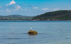 A day by the Bay - Seascape (Merrillie) Tags: bird southcoast australia beach landscape waterscape water batemansbay longbeach rocks outdoors seascape seagull australiaday newsouthwales sea