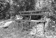 Old iron and wooden bench in the Abbey cemetery (Monceau) Tags: old iron wooden bench vintage cemetery blackandwhite monochrome
