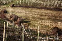 Rotoloni invernali (Gianni Armano) Tags: rotoloni invernali foto gianni armano photo flickr