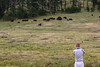 BLACK HILLS -CUSTER STATE PARK6 (TravelKees) Tags: natuur usa vakantie dieren youri southdakota custerstatepark blackhills bisons herd