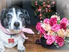 Will you? (mgstanton) Tags: valentine flowers heart dogs roses love valentinesday