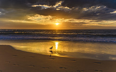 Golden Hour Sunrise Seascape (Merrillie) Tags: daybreak sunrise shellybeach nature australia surf golden centralcoast morning newsouthwales waves earlymorning nsw sea beach ocean sky clouds landscape coastal cloudy outdoors seascape waterscape coast water dawn