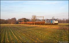 Lineas 186-424, Notter (NL) (CargoDriver) Tags: ústí nad labem západ vnější nádraží antwerpen noord lineas 186 424 czech xpress notter train green network gxn