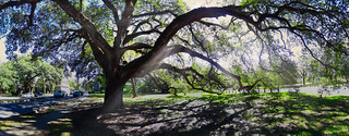 Under The Mighty Oak