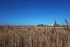Seasalter (NovemberAlex) Tags: seasalter colour nature seaside kent whitstable beachhuts