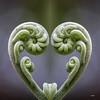 Fern Heart (_aires_) Tags: lima peru aires iris fern fiddlehead reflection canoneos5dmarkiii canonef100mmf28lmacroisusm limaperu