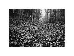 Path (kotmariusz) Tags: path woods leafs monochrome blackandwhite monochromatic poland nature winter las drzewa polska bw analog 35mm filmphotography ilford olympus