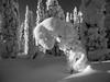 Humility (Fjällkantsbon) Tags: lappland sverige träd brännåker evamårtensson gitsfjälletsnaturreservat skog västerbottenslän se