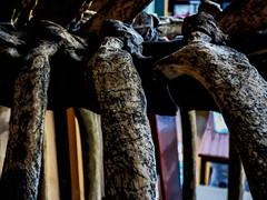 Rhino Ribs (Steve Taylor (Photography)) Tags: rhinoceros skeleton indian onehorned rhino ribs table animal mammal art digital museum eerie uk gb england greatbritain unitedkingdom london texture grantmuseumofzoology bones bokeh